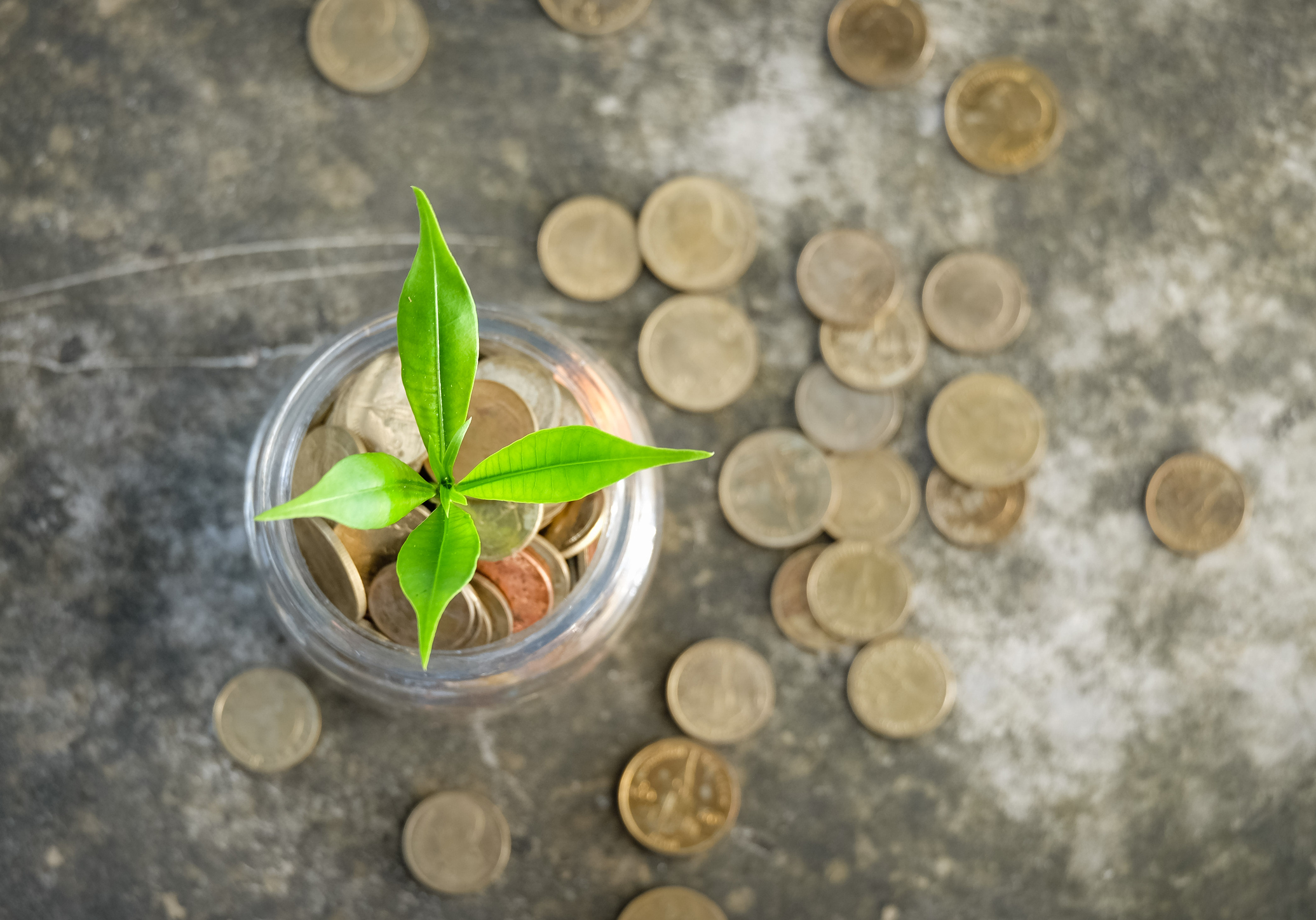 Glass Coin Cart, Plant growing on Coins glass jar and concept money saving coins.