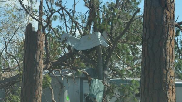 Two broken pines framing trailer